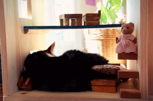 chat dans la maison petit malins