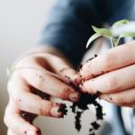 Jardiner en appartement avec des enfants